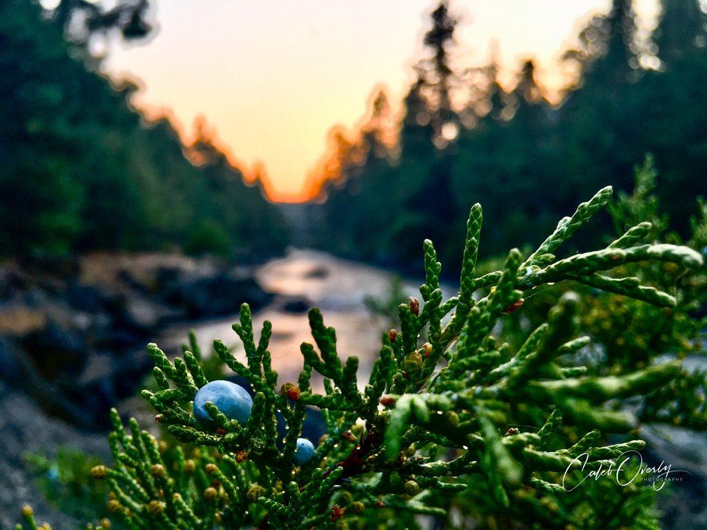 Juniper over Deschutes River Bend Oregon 2020