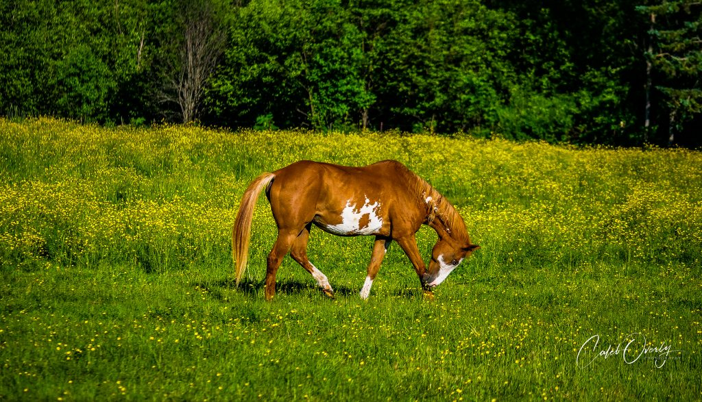 horse 2019