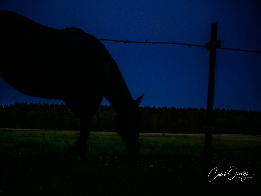 farm horse 2019