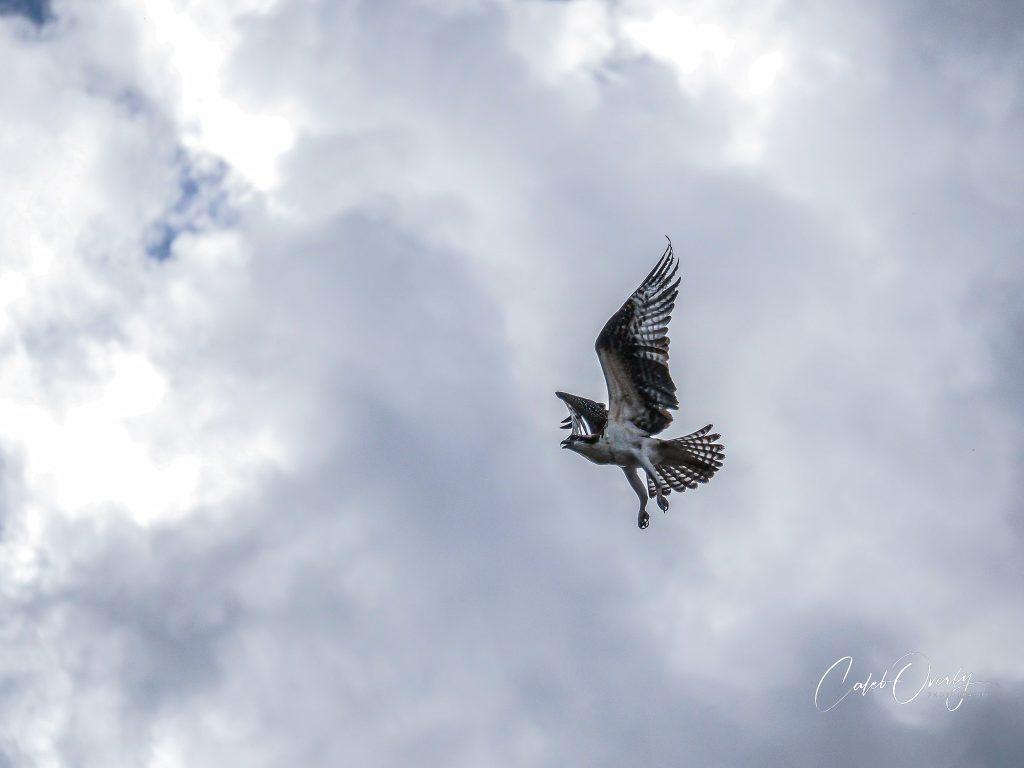 Osprey Bend Oregon 2020